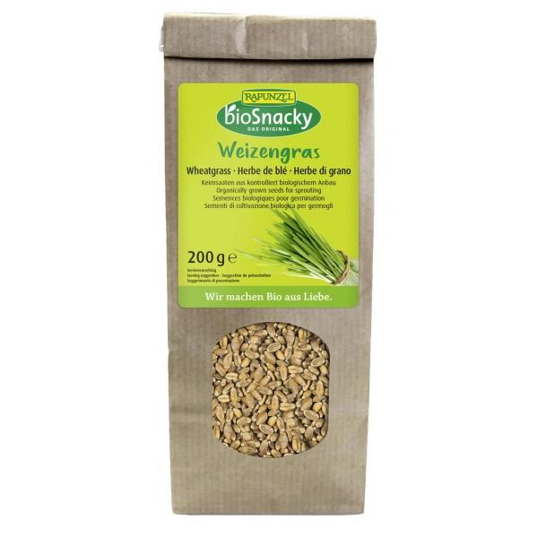 Seminte de iarba de grau pentru germinat bio